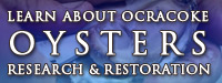 Ocracoke Oyster Restoration Project